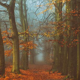 V587D - Van de Goor, Lars - Path of The Mystics