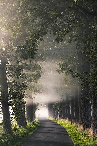 V588D - Van de Goor, Lars - Rays of Fog