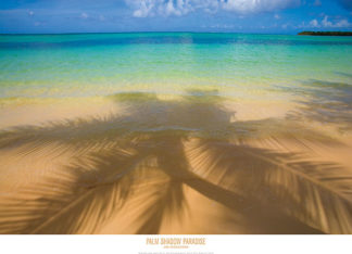 Z65 - Zuckerman, Jim - Palm Shadow Paradise