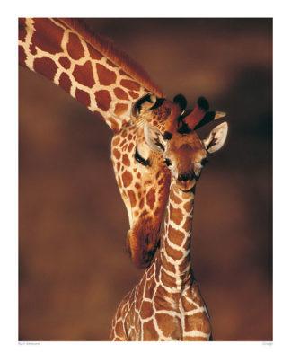 20726 - Ammann, Karl - Giraffe