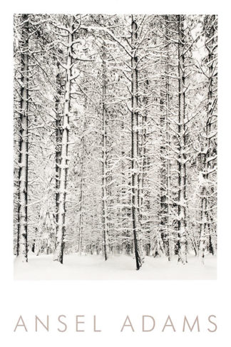 A144 - Adams, Ansel - Pine Forest in the Snow, Yosemite National Park