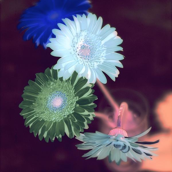 ABFLC05 - Blaustein, Alan - Floral Color #5