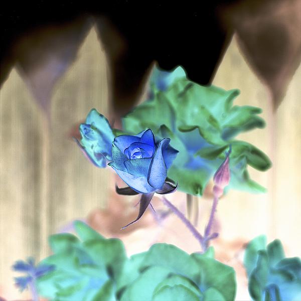 ABFLC19 - Blaustein, Alan - Floral Color #7