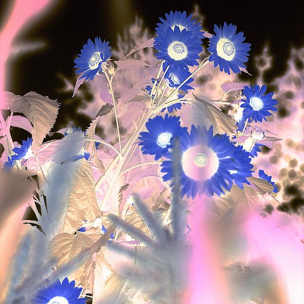 ABFLC21 - Blaustein, Alan - Floral Color #8