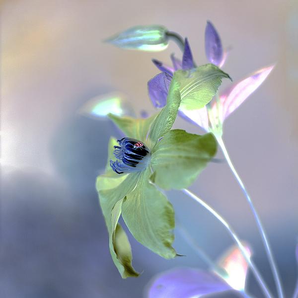 ABFLC22 - Blaustein, Alan - Floral Color #9