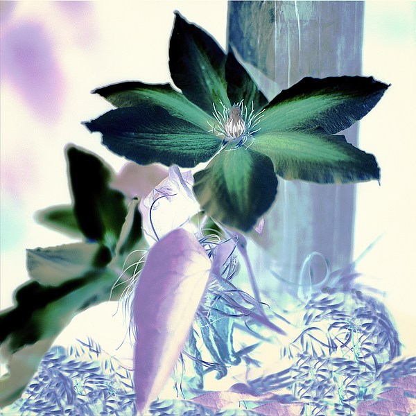 ABFLC23 - Blaustein, Alan - Floral Color #10