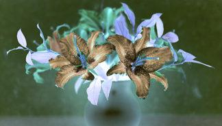 ABFLH04C - Blaustein, Alan - Floral Color #20