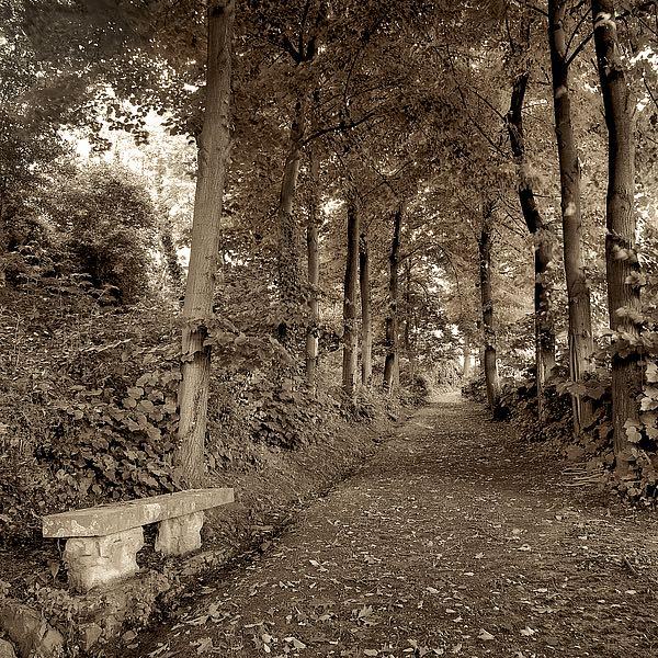 ABIT1865 - Blaustein, Alan - Fiesole Giardini #2