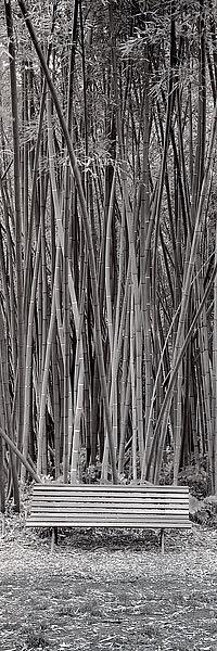 ABIT215 - Blaustein, Alan - Orto Botanico #1