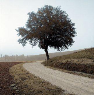 ABITC2998 - Blaustein, Alan - Tuscany #12
