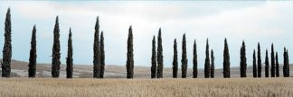 ABITH106C - Blaustein, Alan - Val d'Orcia Pano #5