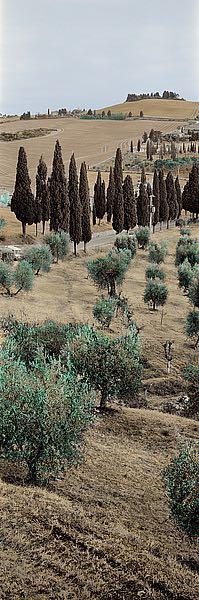 ABITV389 - Blaustein, Alan - Tuscany #13
