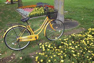 ABJPD0272 - Blaustein, Alan - Japan Bicycle #1