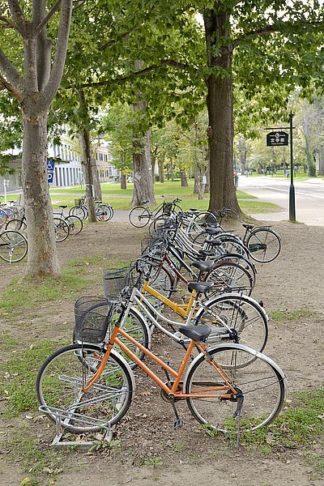 ABJPD0442 - Blaustein, Alan - Japan Bicycle #12