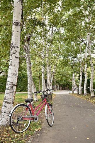 ABJPD0569 - Blaustein, Alan - Japan Bicycle #20