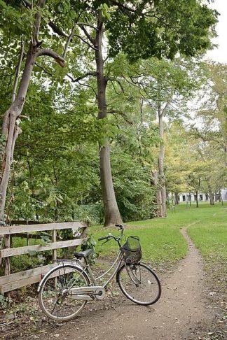 ABJPD0632 - Blaustein, Alan - Japan Bicycle #24