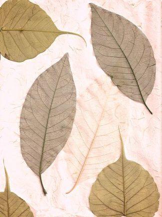 ABLF06 - Blaustein, Alan - Floral #23