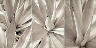 ABLF181 - Blaustein, Alan - Floral Panel #4
