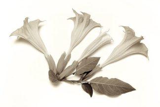 ABLF238 - Blaustein, Alan - Garden Bloom #22
