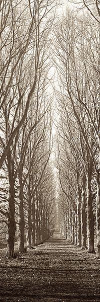 ABNYV6 - Blaustein, Alan - Hampton Gates Promenade