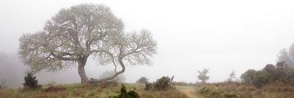 ABSFH44 - Blaustein, Alan - Oak Tree #24