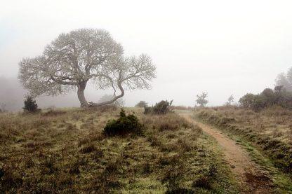 ABSFH44A - Blaustein, Alan - Oak Tree #25