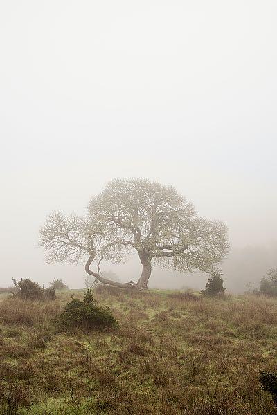 ABSFH44B - Blaustein, Alan - Oak Tree #26