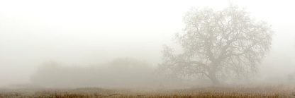ABSFH45 - Blaustein, Alan - Oak Tree #27