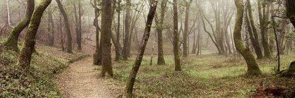 ABSFH46 - Blaustein, Alan - Oak Tree #20