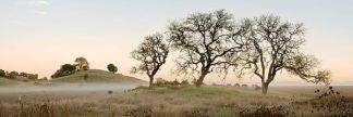 ABSFH48 - Blaustein, Alan - Oak Tree #32
