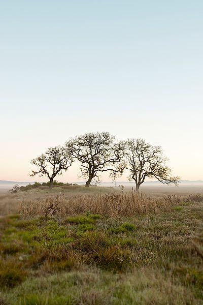 ABSFH48A - Blaustein, Alan - Oak Tree #34
