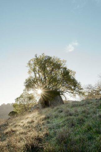ABSFH50 - Blaustein, Alan - Oak Tree #35