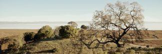 ABSFH51 - Blaustein, Alan - Oak Tree #37