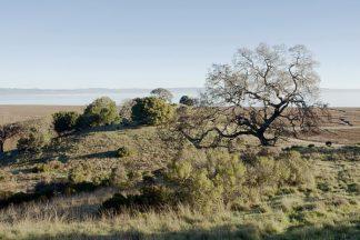 ABSFH51A - Blaustein, Alan - Oak Tree #38