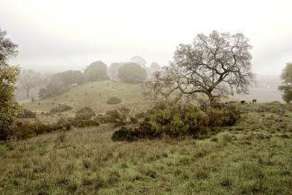 ABSFH53A - Blaustein, Alan - Oak Tree #42
