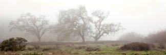 ABSFH59 - Blaustein, Alan - Oak Tree #58
