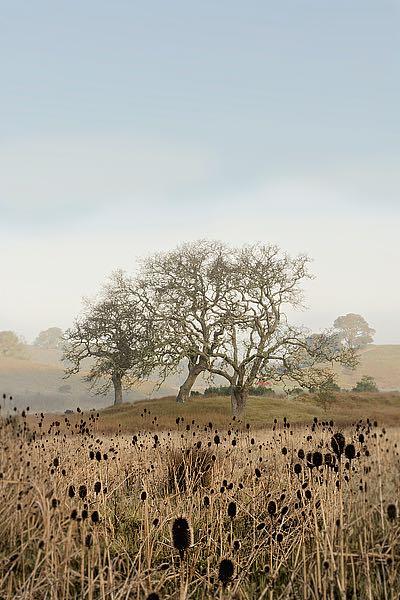ABSFH67A - Blaustein, Alan - Oak Tree #67