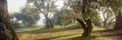 ABSFH70 - Blaustein, Alan - Oak Tree #71