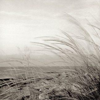 ABSH136 - Blaustein, Alan - Tuscan Coast Dunes #1