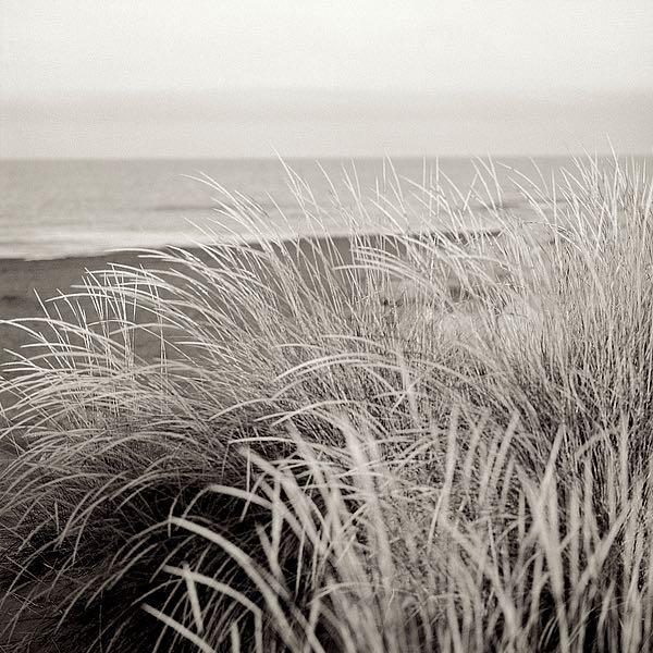 ABSH136A - Blaustein, Alan - Tuscan Coast Dunes #2