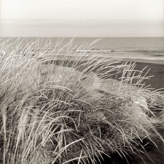 ABSH137 - Blaustein, Alan - Tuscan Coast Dunes #3
