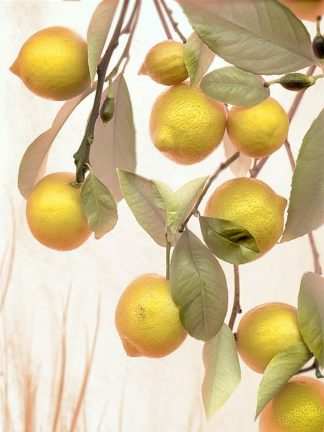 ABSL53 - Blaustein, Alan - Lemons #1