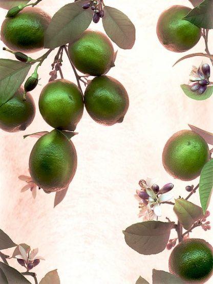 ABSL54 - Blaustein, Alan - Limes #1