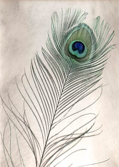 ABSLF109 - Blaustein, Alan - Feathers #11