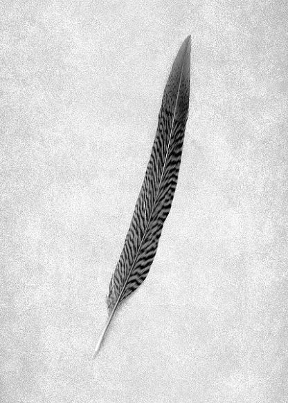 ABSLF113 - Blaustein, Alan - Feathers #4
