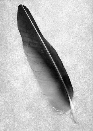 ABSLF116 - Blaustein, Alan - Feathers #7
