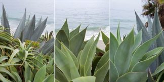 ABSPT003 - Blaustein, Alan - Laguna Coast #2