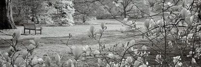 ABTRH11 - Blaustein, Alan - Hampton Magnolia #1