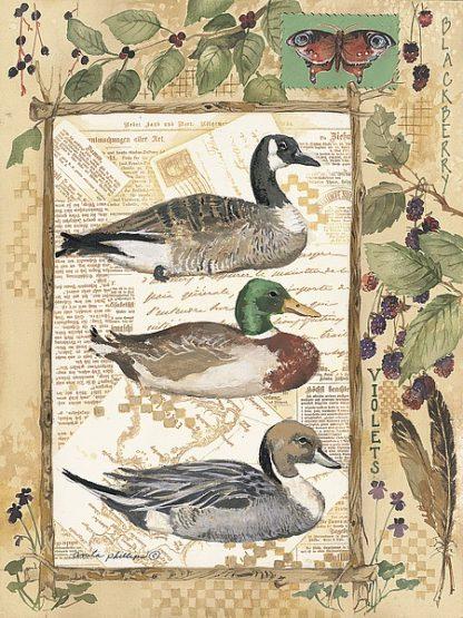 AP013 - Phillips, Anita - 3 Ducks
