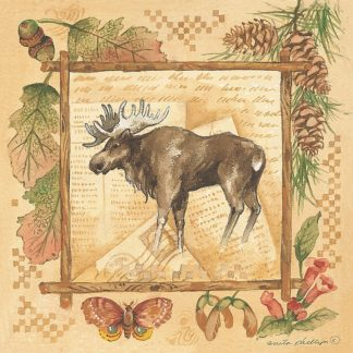 AP042 - Phillips, Anita - Moose